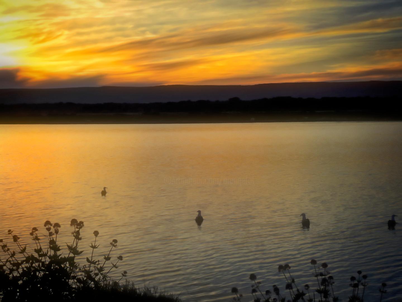 Alain Brasseur - Sérénité sur les étangs de Pérols (Camargue)