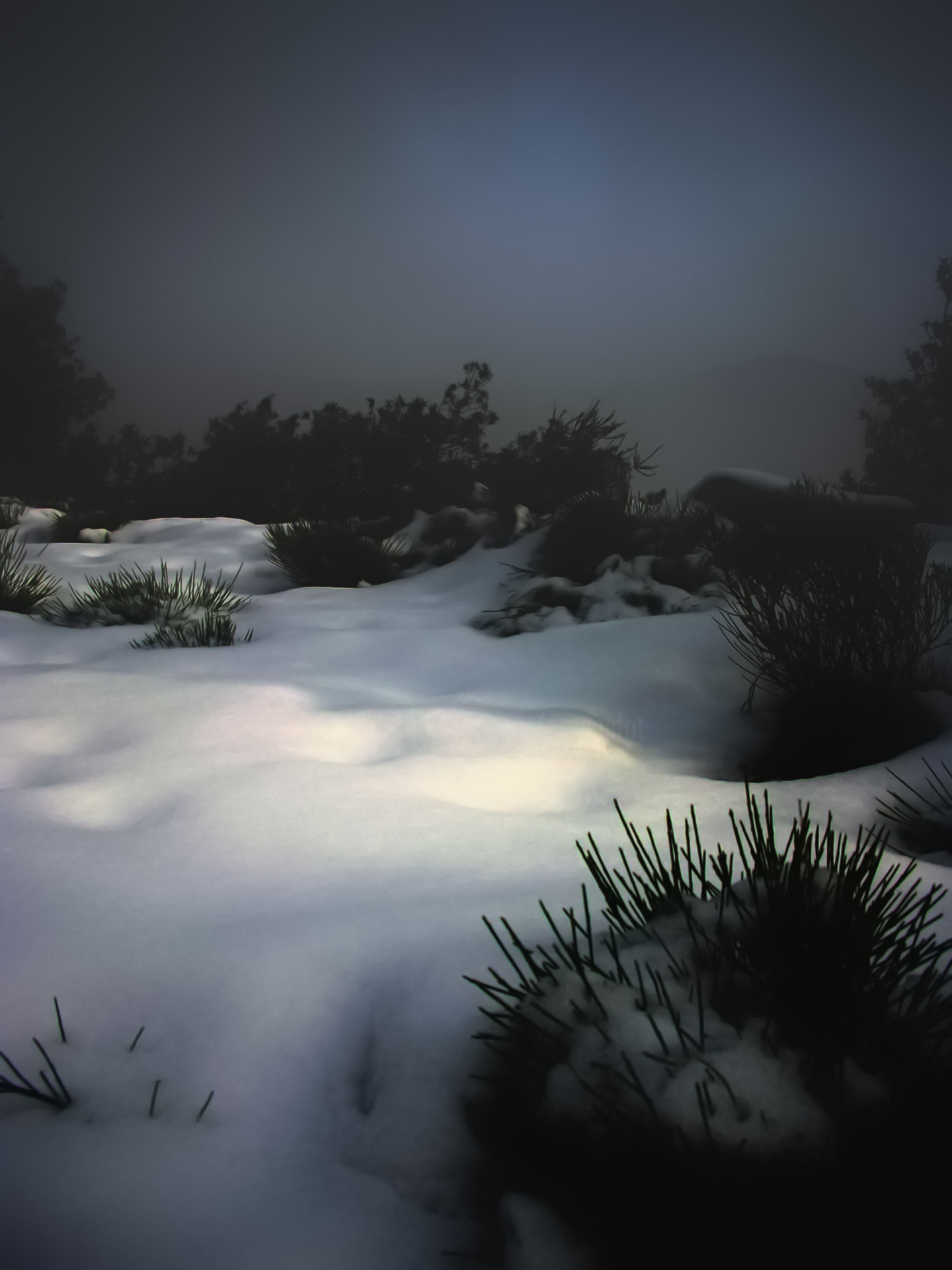 Alain Brasseur - Clair-obscur hivernal