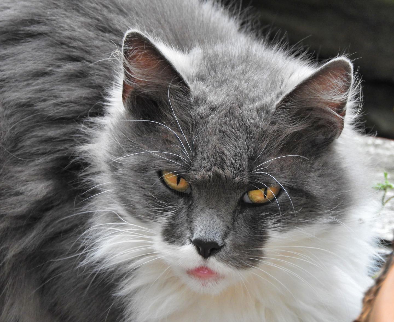 Alain Brasseur - Chat'perlipopette, chat dure encore et encore./ 10