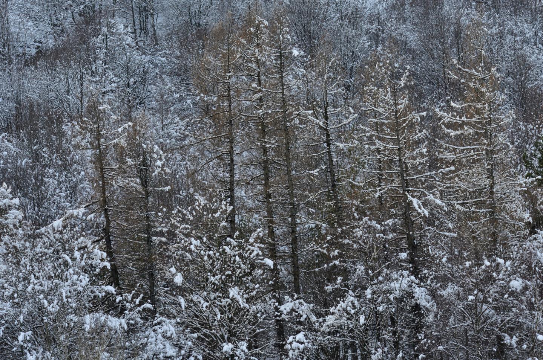 Alain Brasseur - Bel hiver / 2
