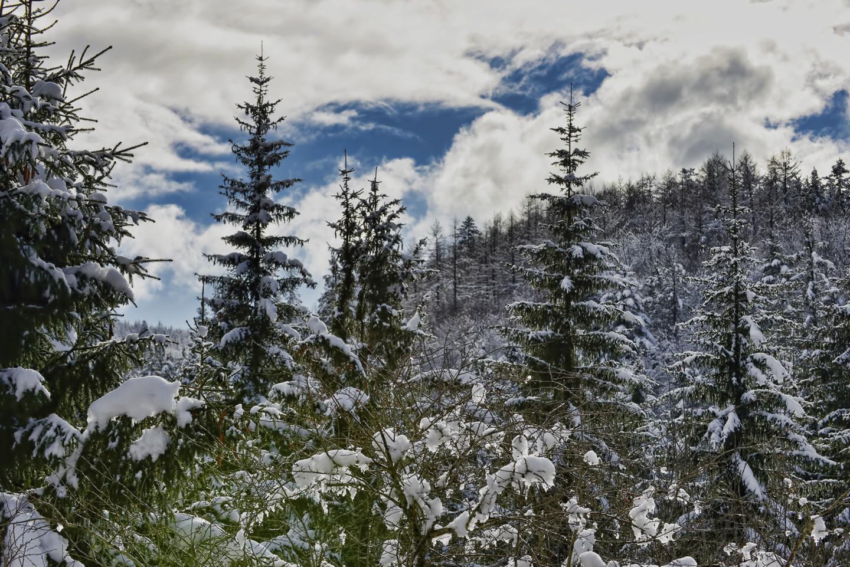 Alain Brasseur - Bel hiver / 9