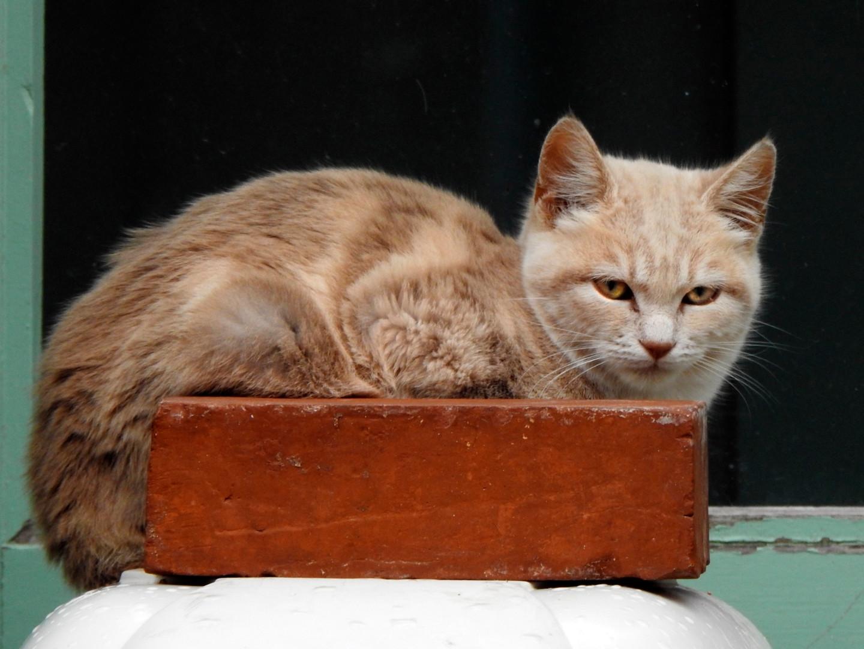 Alain Brasseur - Chat'perlipopette, chat dure encore et encore./ 19