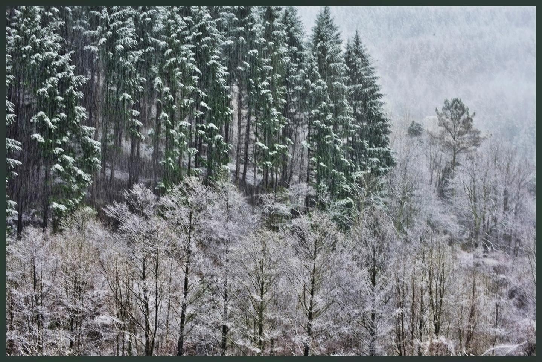 ALAIN BRASSEUR - Le bel hiver.....68
