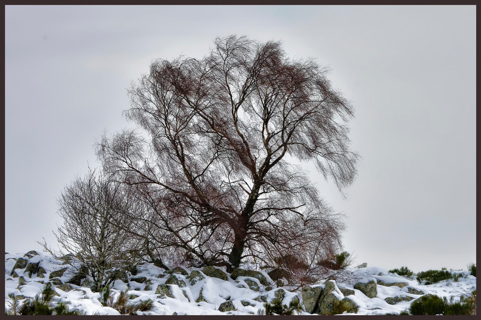 ALAIN BRASSEUR - Le bel hiver.....99