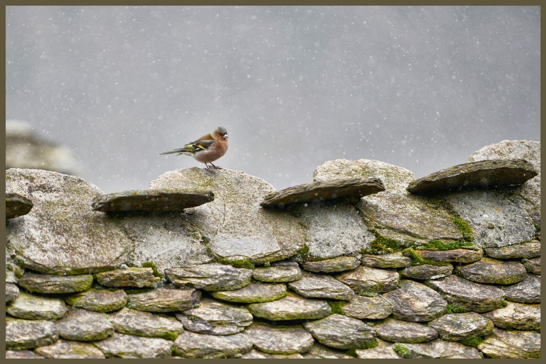 ALAIN BRASSEUR - Le bel hiver.....98