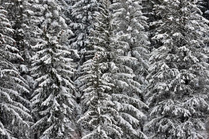ALAIN BRASSEUR - Bel hiver.