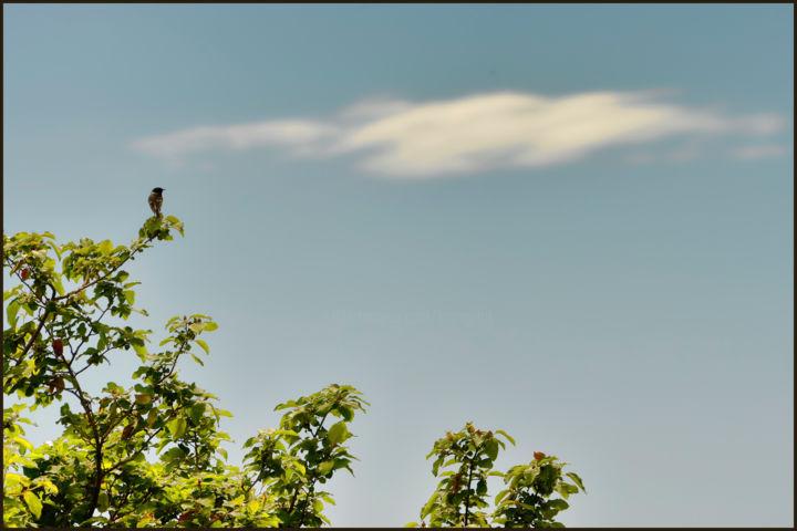 ALAIN BRASSEUR - Sur la plus haute branche........un rossignol chantait .